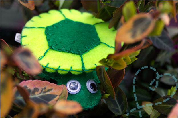 sfeerfoto schildpad vilt