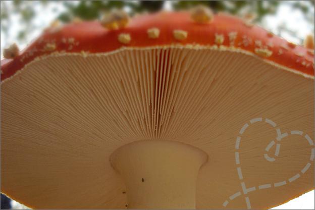 close paddenstoel