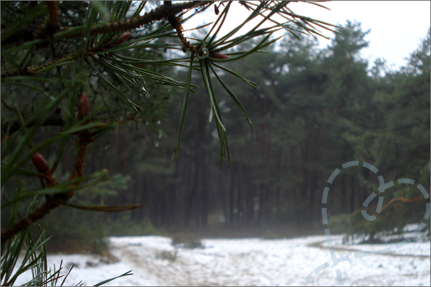 Bos mist sneeuw