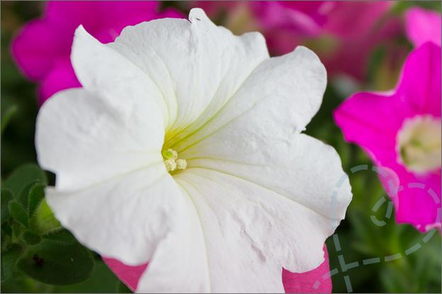 bloemen in tuin