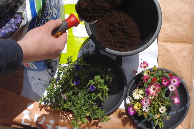plantjes in tuin