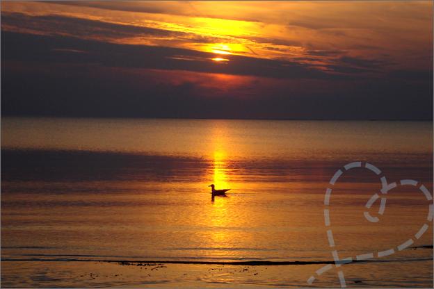 vogel zonsondergang