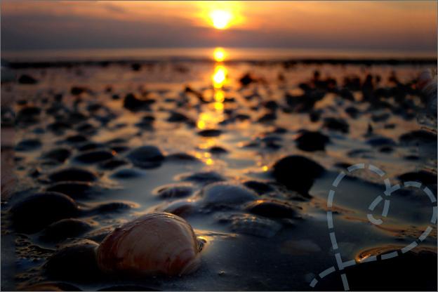 schelpen zonsondergang