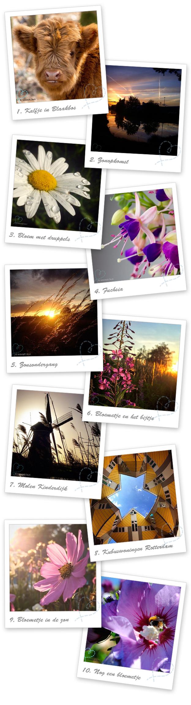 overzicht instagram