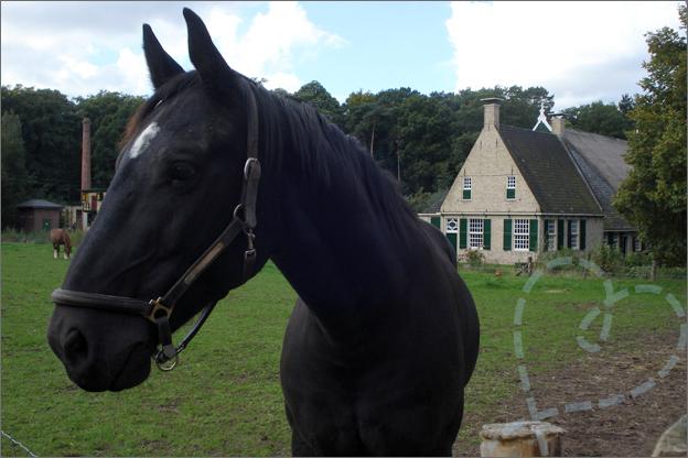 openluchtmuseum arnhem paard