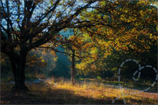 zonneschijn boom