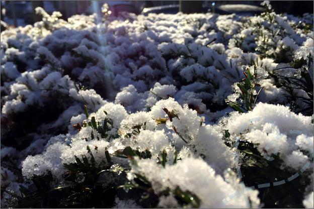 sneeuw heg