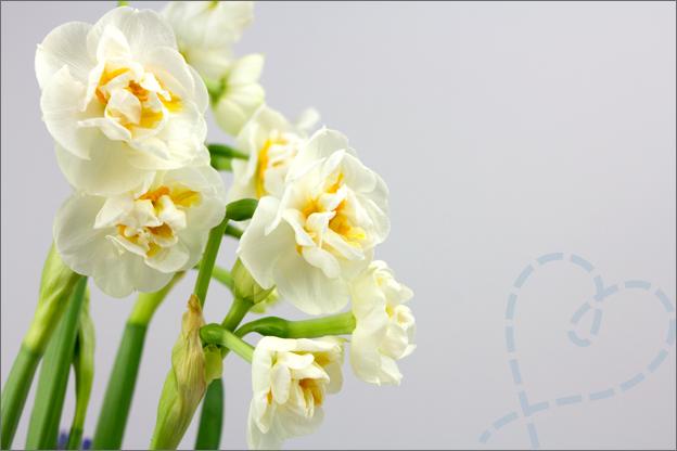 Narcis bloemen foto