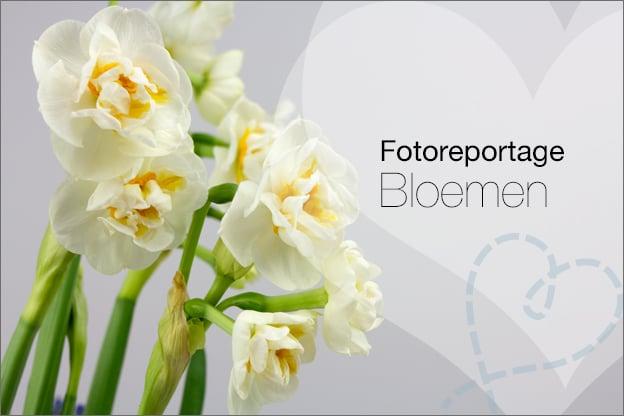 foto's bloemen