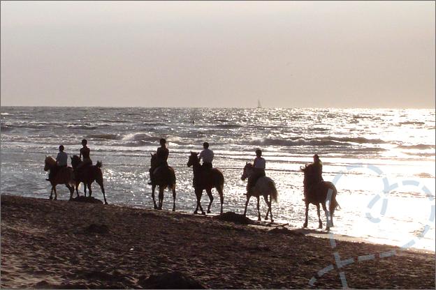 Paardjes aan het strand de Haan