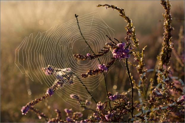 Regte_heide_riel_goirle_spinnenweb