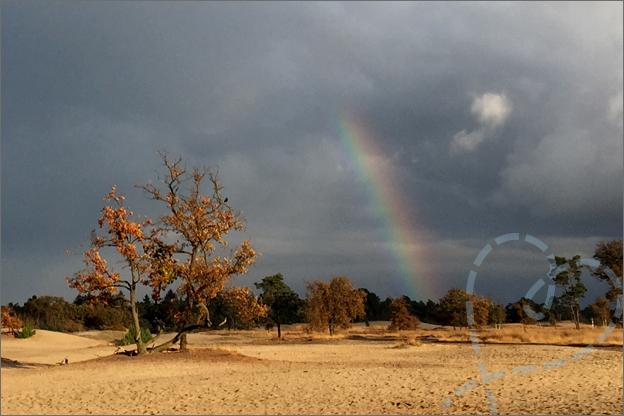 Loonse en drunense duinen regenboog