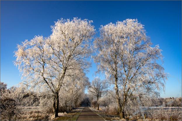 foto_winter_1_bospad