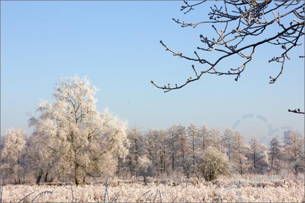 foto_winter_6_bos