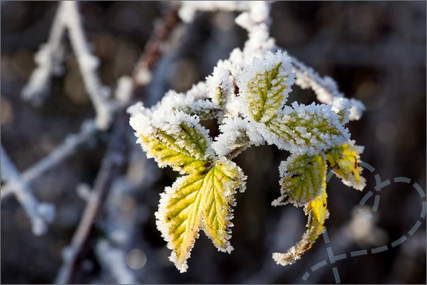 foto_winter_8_bladeren