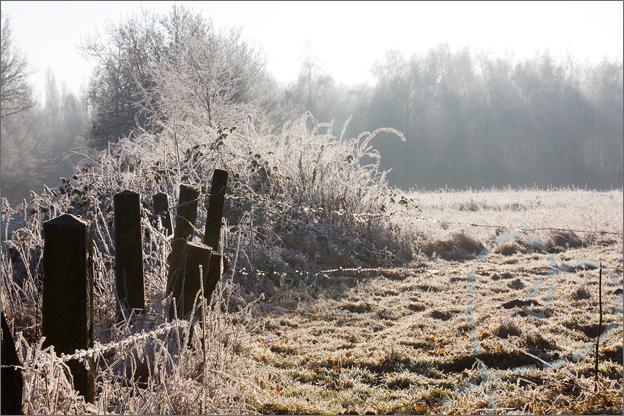 foto_winter_9_tegenlicht
