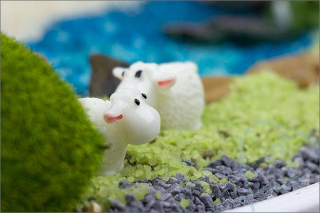 schaapjes in mini tuin