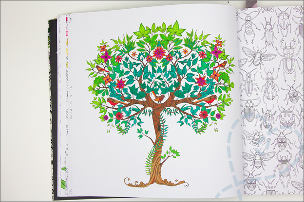 kleuren voor volwassen boom vogels kleurverloop