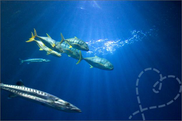 Burgers Zoo ocean vissen