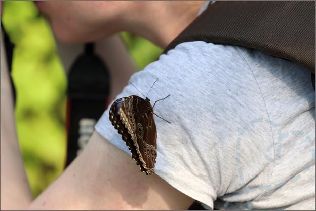 Burgers zoo Mangrove overal vlinders