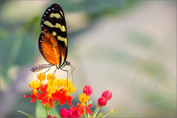 Burgers zoo Mangrove vlinder op bloem