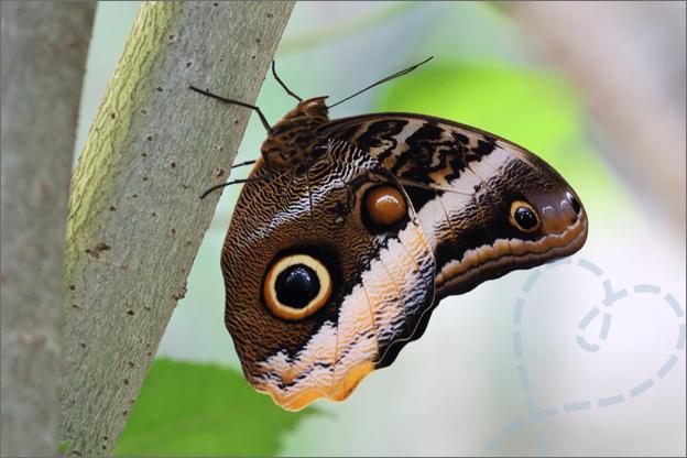 Burgers zoo Mangrove vlinder dicht geklapt