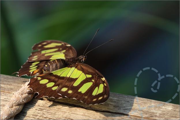 Burgers zoo Mangrove vlinder op hout natuur bos