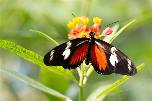 Burgers zoo Mangrove vlinder kleurrijk