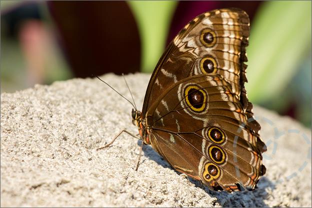 Burgers zoo Mangrove voorbeeld dicht vlinder