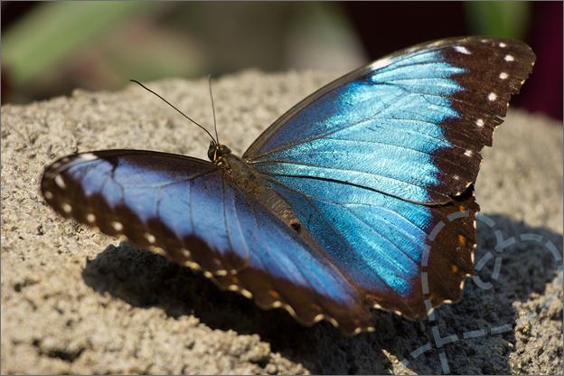 Burgers zoo Mangrove voorbeeld open vlinder