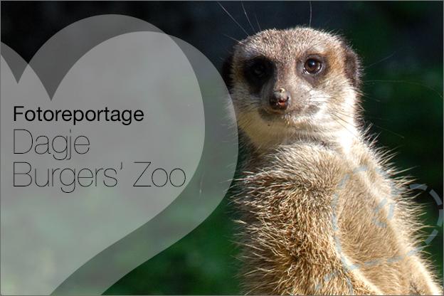 Fotoreportage Burgers Zoo