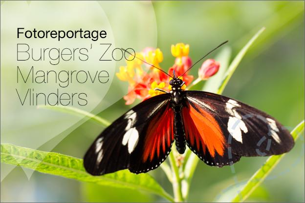 Mangrove fotos vlinders burgers zoo