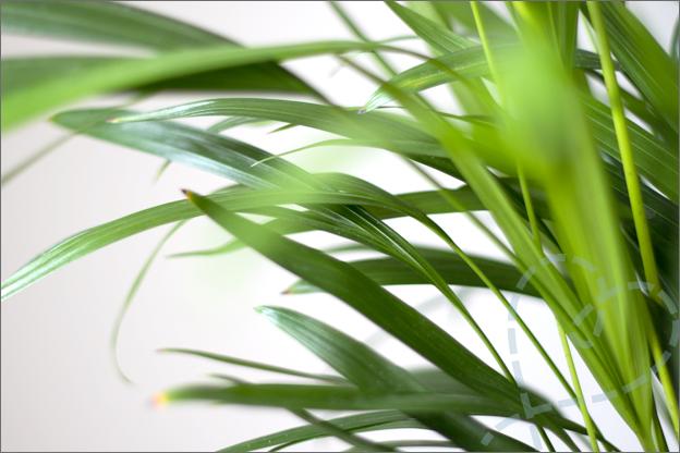 nieuw interieur ons huis eethoek plant