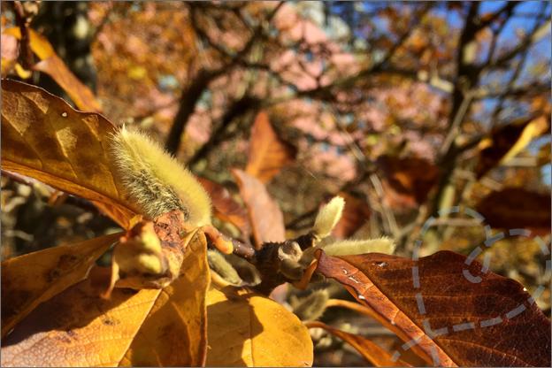 verkleurde bladeren herfst