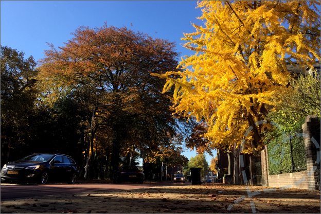 gele boom herfst bladeren