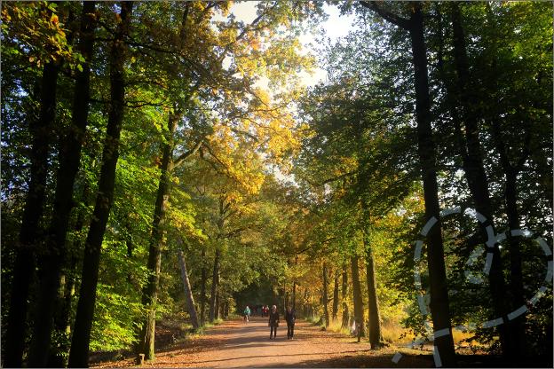 oisterwijkse bossen