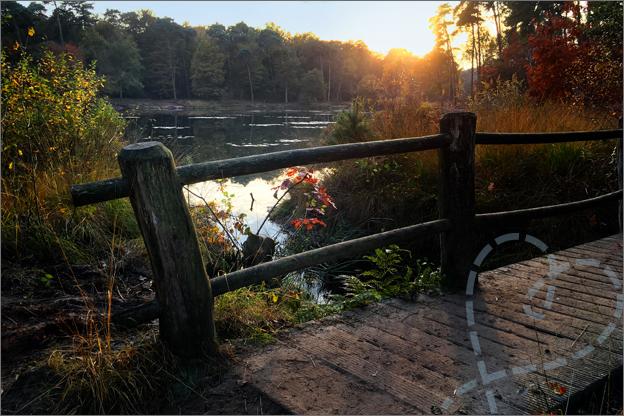 brug bos herfst zonsondergang