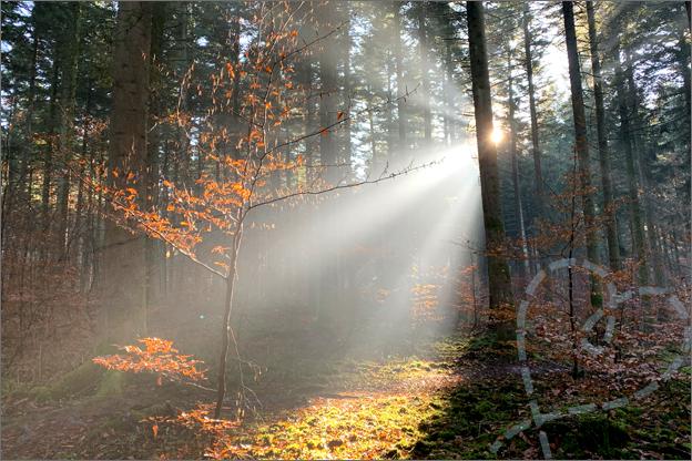 Centerparcs les trois forest vakantie verslag mist