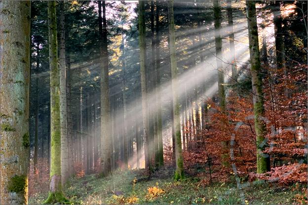 centerparcs les trois forest bos lichtstralen