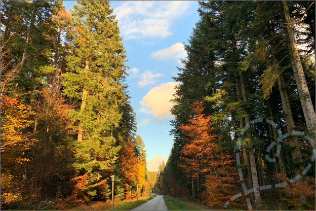 foto centerparcs les trois forest bos