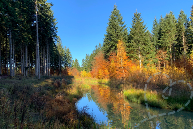 foto centerparcs les trois forest herfst bos