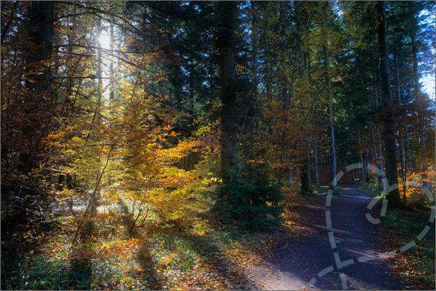 vakantie centerparcs les trois forest wandelen